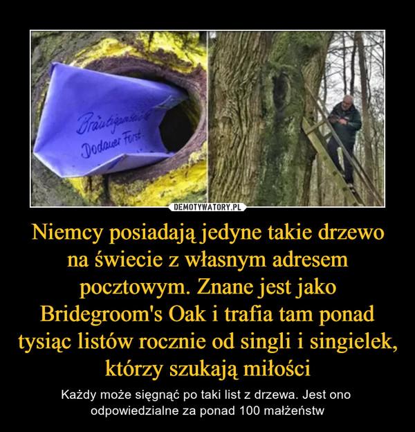 Niemcy posiadają jedyne takie drzewo na świecie z własnym adresem pocztowym. Znane jest jako Bridegroom's Oak i trafia tam ponad tysiąc listów rocznie od singli i singielek, którzy szukają miłości – Każdy może sięgnąć po taki list z drzewa. Jest ono odpowiedzialne za ponad 100 małżeństw