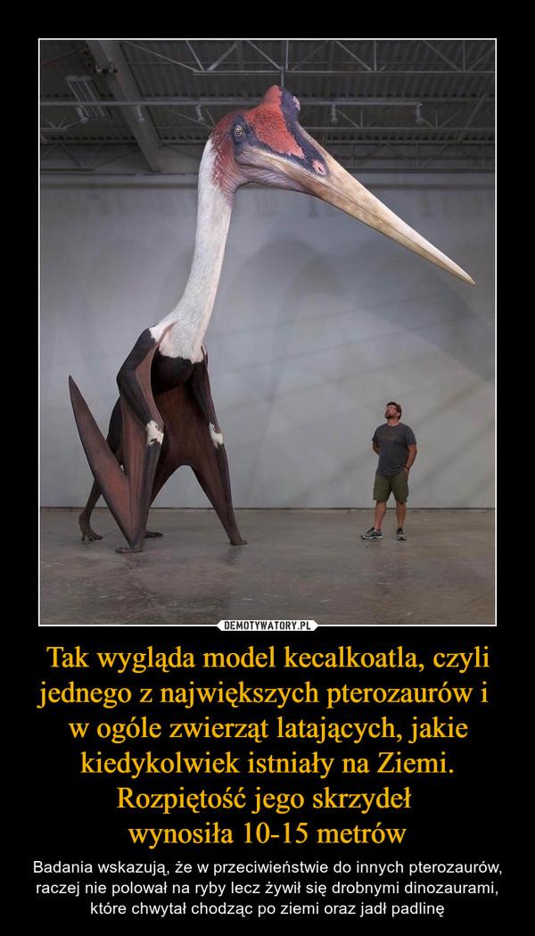 Tak wygląda model kecalkoatla, czyli jednego z największych pterozaurów i w ogóle zwierząt latających, jakie kiedykolwiek istniały na Ziemi. Rozpiętość jego skrzydeł wynosiła 10-15 metrów – Badania wskazują, że w przeciwieństwie do innych pterozaurów, raczej nie polował na ryby lecz żywił się drobnymi dinozaurami, które chwytał chodząc po ziemi oraz jadł padlinę