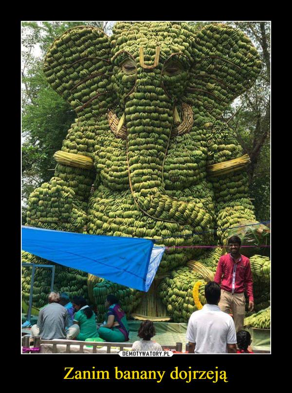 Zanim banany dojrzeją –