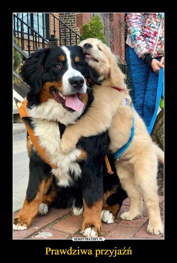 Prawdziwa przyjaźń –