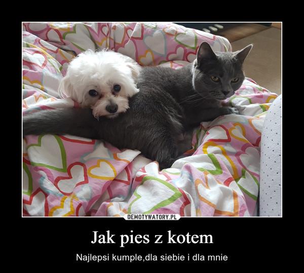 Jak pies z kotem – Najlepsi kumple,dla siebie i dla mnie