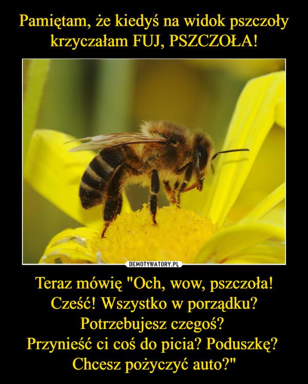 """Teraz mówię """"Och, wow, pszczoła! Cześć! Wszystko w porządku? Potrzebujesz czegoś? Przynieść ci coś do picia? Poduszkę? Chcesz pożyczyć auto?"""" –"""