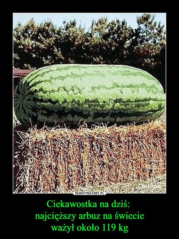 Ciekawostka na dziś: najcięższy arbuz na świecieważył około 119 kg –