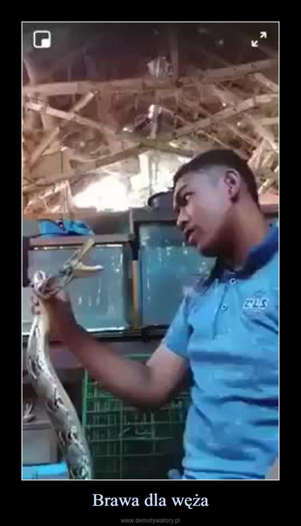 Brawa dla węża –