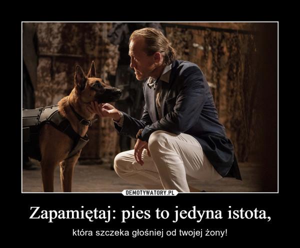 Zapamiętaj: pies to jedyna istota, – która szczeka głośniej od twojej żony!