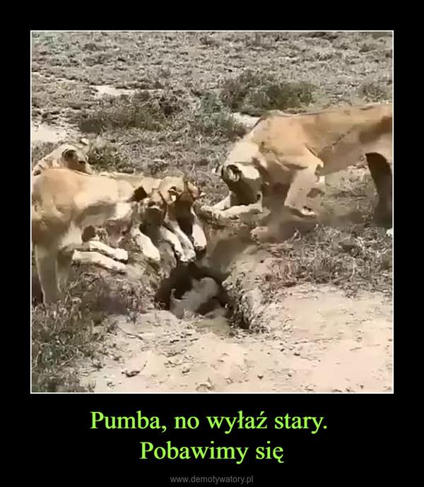 Pumba, no wyłaź stary. Pobawimy się –