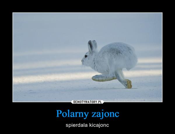 Polarny zajonc – ѕріеrdala kicajonc
