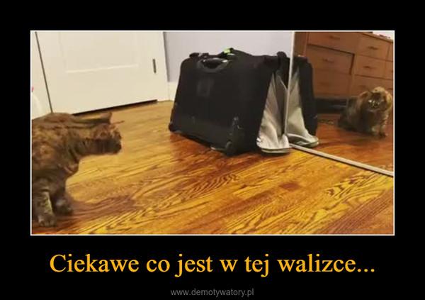 Ciekawe co jest w tej walizce... –