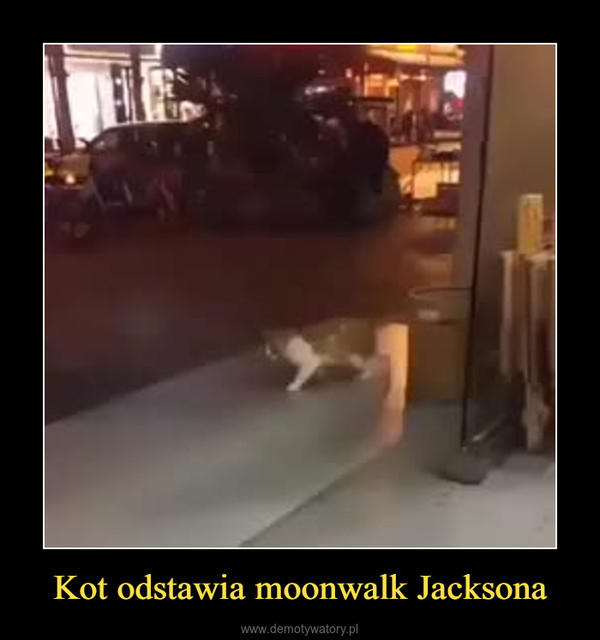 Kot odstawia moonwalk Jacksona –