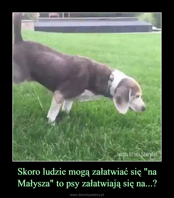 """Skoro ludzie mogą załatwiać się """"na Małysza"""" to psy załatwiają się na...? –"""