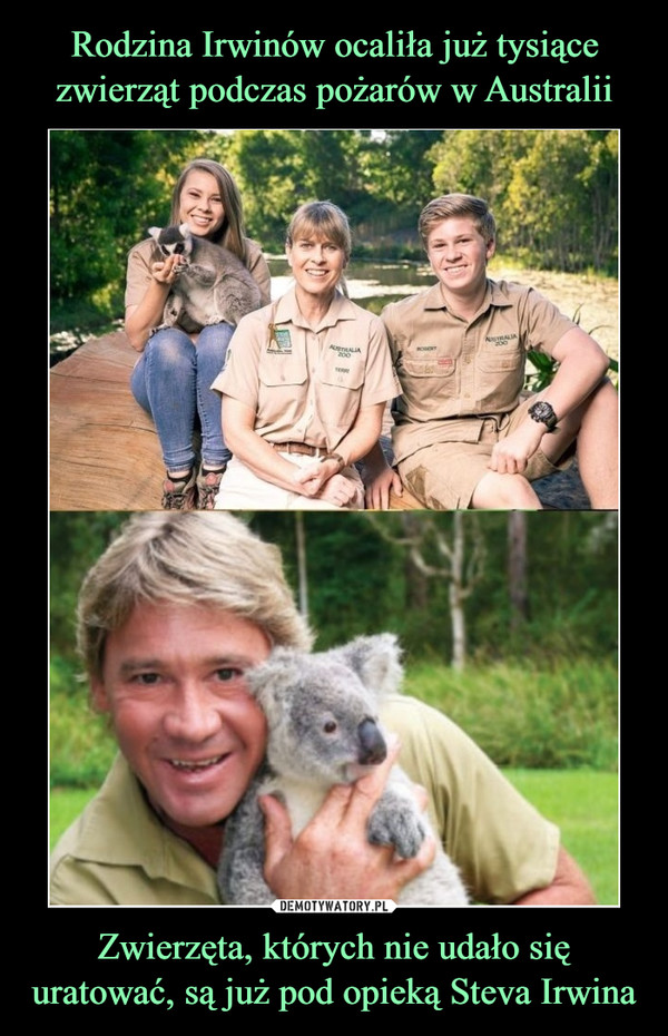 Zwierzęta, których nie udało się uratować, są już pod opieką Steva Irwina –