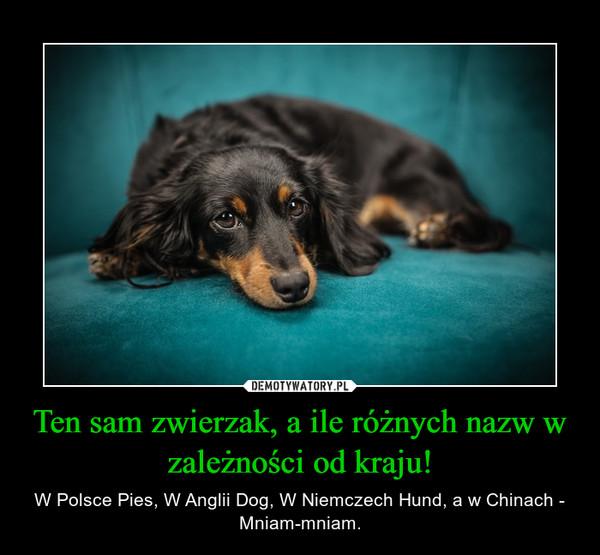 Ten sam zwierzak, a ile różnych nazw w zależności od kraju! – W Polsce Pies, W Anglii Dog, W Niemczech Hund, a w Chinach - Mniam-mniam.