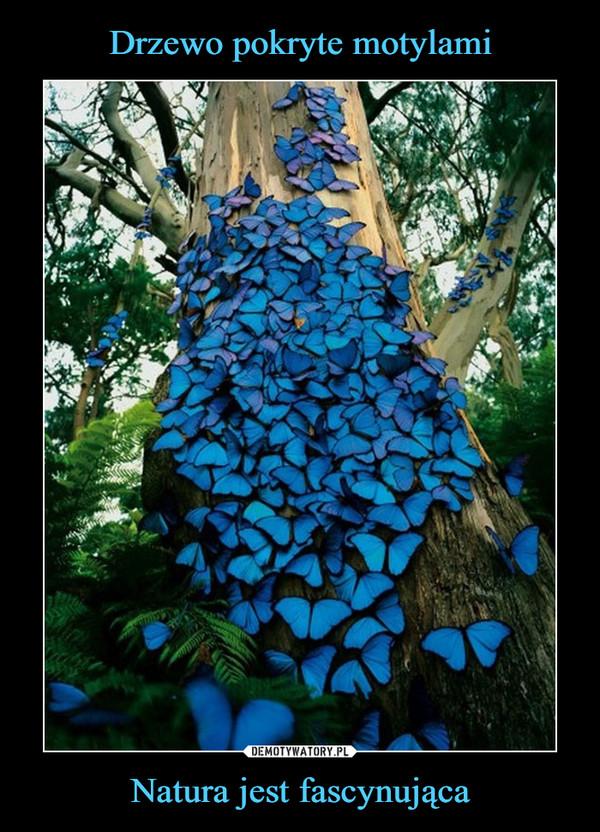 Natura jest fascynująca –