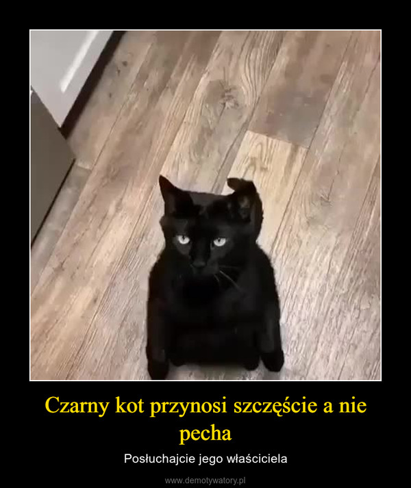 Czarny kot przynosi szczęście a nie pecha – Posłuchajcie jego właściciela