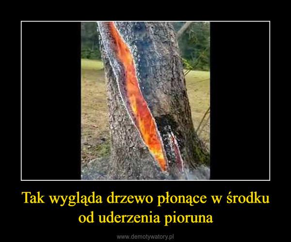 Tak wygląda drzewo płonące w środku od uderzenia pioruna –