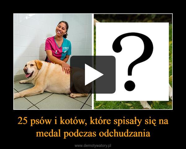 25 psów i kotów, które spisały się na medal podczas odchudzania –