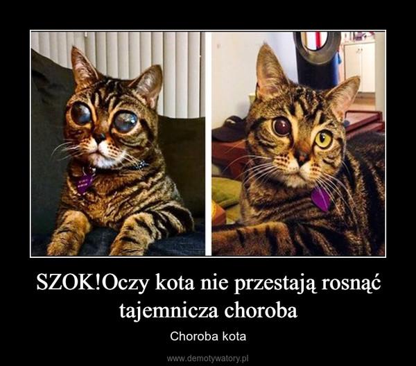 SZOK!Oczy kota nie przestają rosnąć tajemnicza choroba – Choroba kota