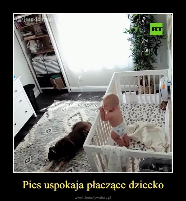 Pies uspokaja płaczące dziecko –