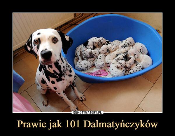 Prawie jak 101 Dalmatyńczyków –