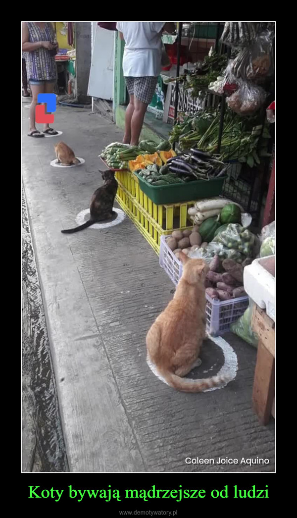 Koty bywają mądrzejsze od ludzi –