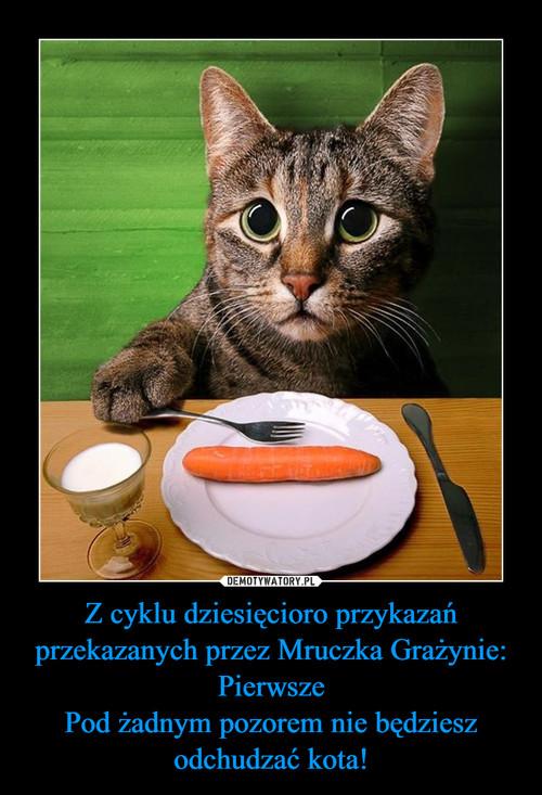 Z cyklu dziesięcioro przykazań przekazanych przez Mruczka Grażynie: Pierwsze Pod żadnym pozorem nie będziesz odchudzać kota!