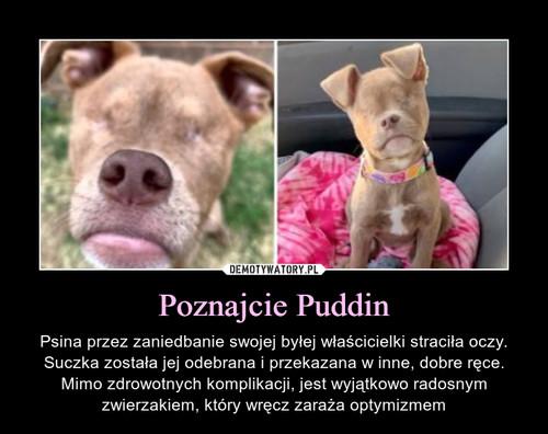 Poznajcie Puddin