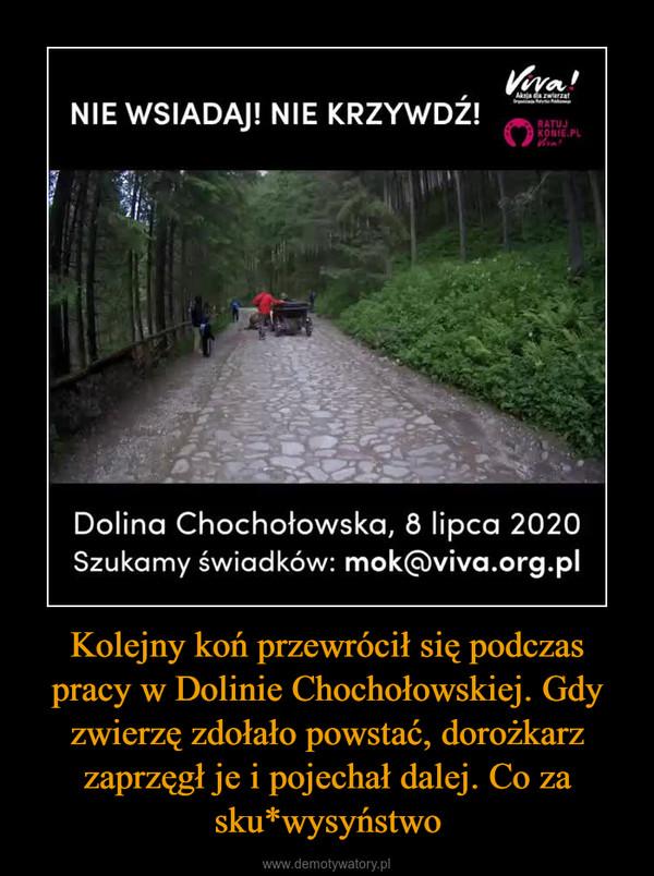 Kolejny koń przewrócił się podczas pracy w Dolinie Chochołowskiej. Gdy zwierzę zdołało powstać, dorożkarz zaprzęgł je i pojechał dalej. Co za sku*wysyństwo –