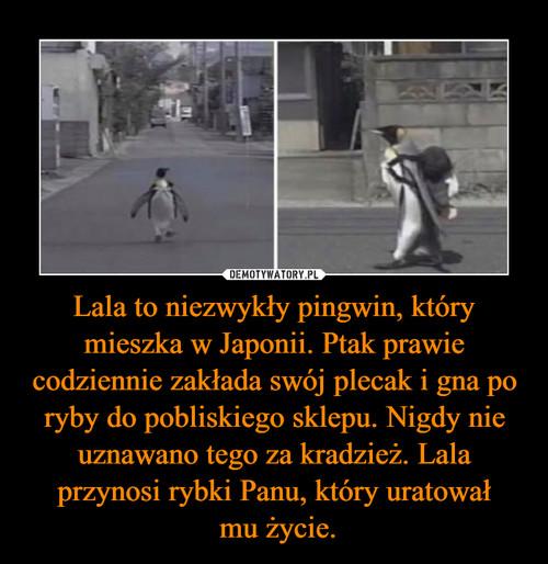 Lala to niezwykły pingwin, który mieszka w Japonii. Ptak prawie codziennie zakłada swój plecak i gna po ryby do pobliskiego sklepu. Nigdy nie uznawano tego za kradzież. Lala przynosi rybki Panu, który uratował  mu życie.