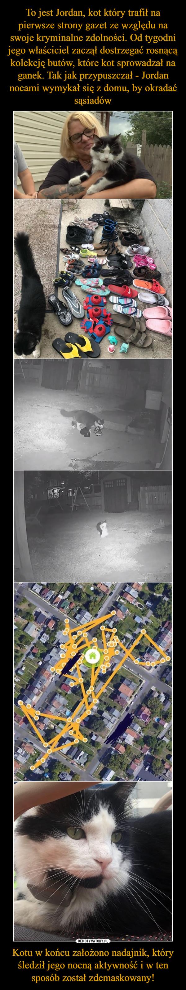 Kotu w końcu założono nadajnik, który śledził jego nocną aktywność i w ten sposób został zdemaskowany! –