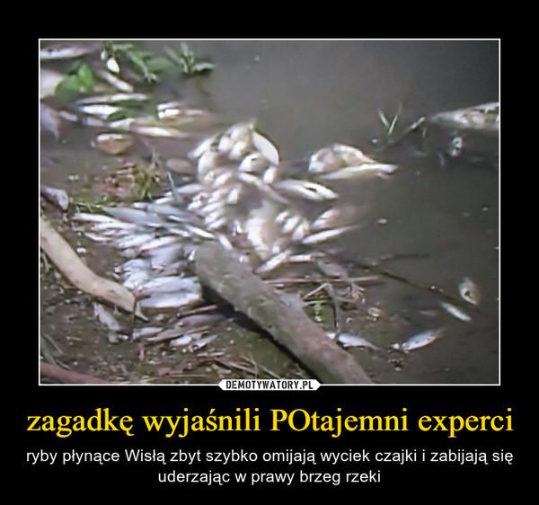zagadkę wyjaśnili POtajemni experci – ryby płynące Wisłą zbyt szybko omijają wyciek czajki i zabijają się uderzając w prawy brzeg rzeki