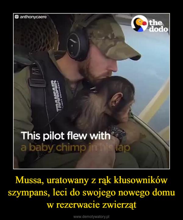 Mussa, uratowany z rąk kłusowników szympans, leci do swojego nowego domu w rezerwacie zwierząt –