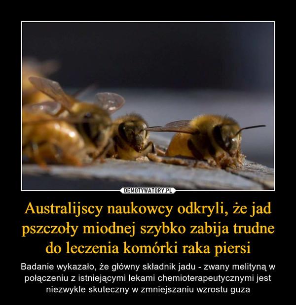 Australijscy naukowcy odkryli, że jad pszczoły miodnej szybko zabija trudne do leczenia komórki raka piersi – Badanie wykazało, że główny składnik jadu - zwany melityną w połączeniu z istniejącymi lekami chemioterapeutycznymi jest niezwykle skuteczny w zmniejszaniu wzrostu guza
