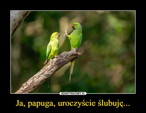 Ja, papuga, uroczyście ślubuję...
