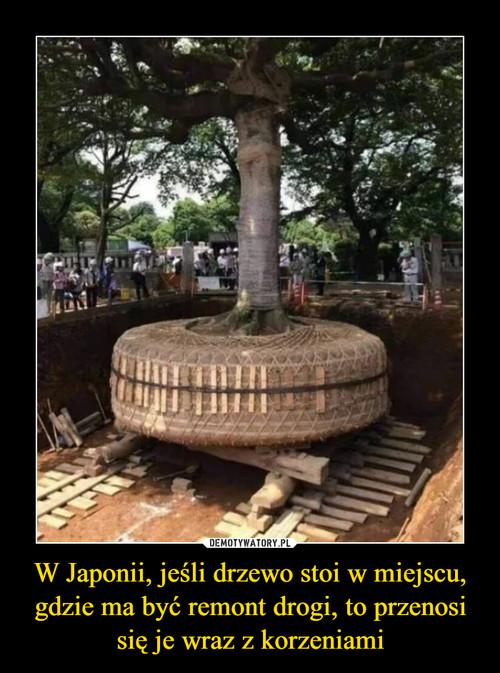 W Japonii, jeśli drzewo stoi w miejscu, gdzie ma być remont drogi, to przenosi się je wraz z korzeniami