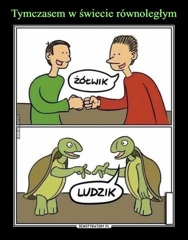 –  żółwik ludzik
