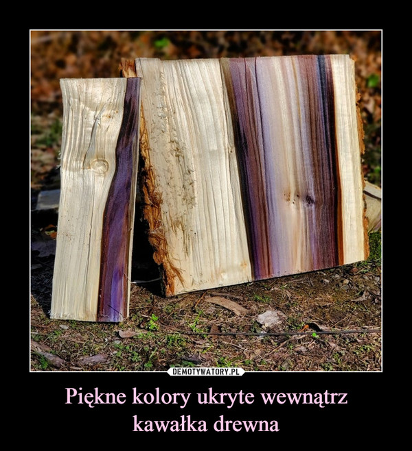 Piękne kolory ukryte wewnątrzkawałka drewna –