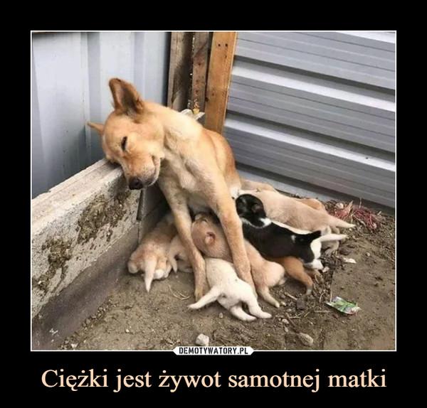 Ciężki jest żywot samotnej matki –