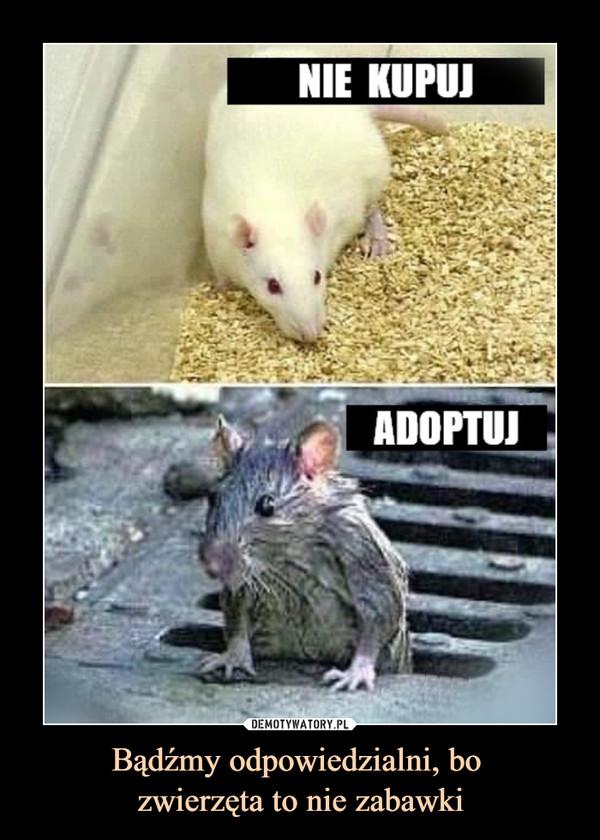 Bądźmy odpowiedzialni, bo zwierzęta to nie zabawki –  NIE KUPUJADOPTUJ