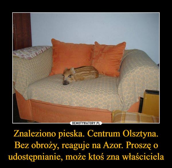 Znaleziono pieska. Centrum Olsztyna. Bez obroży, reaguje na Azor. Proszę o udostępnianie, może ktoś zna właściciela –