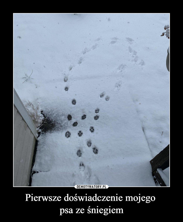 Pierwsze doświadczenie mojego psa ze śniegiem –