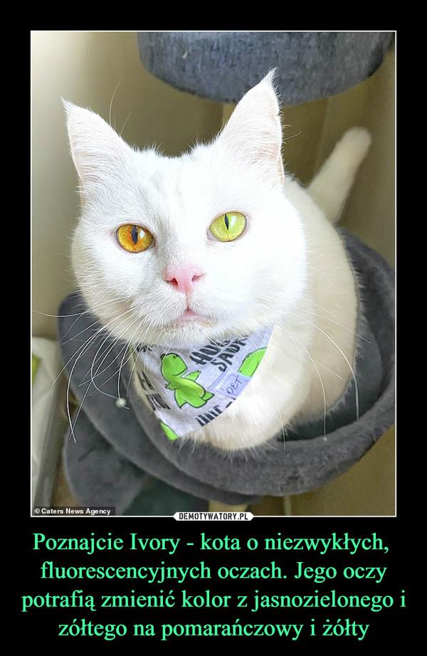 Poznajcie Ivory - kota o niezwykłych, fluorescencyjnych oczach. Jego oczy potrafią zmienić kolor z jasnozielonego i zółtego na pomarańczowy i żółty –