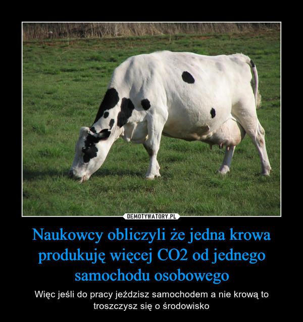 Naukowcy obliczyli że jedna krowa produkuję więcej CO2 od jednego samochodu osobowego – Więc jeśli do pracy jeździsz samochodem a nie krową to troszczysz się o środowisko