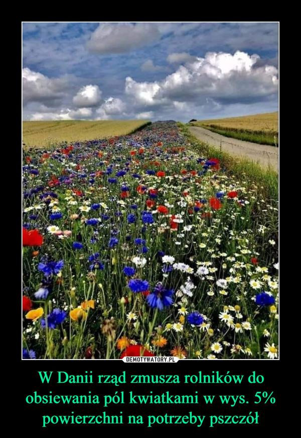 W Danii rząd zmusza rolników do obsiewania pól kwiatkami w wys. 5% powierzchni na potrzeby pszczół –