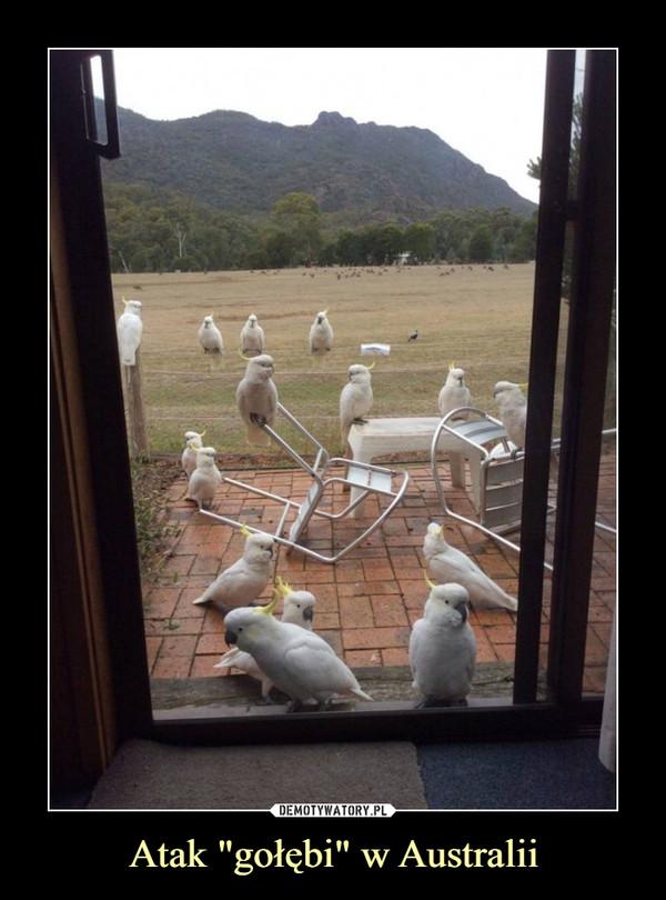"""Atak """"gołębi"""" w Australii –"""