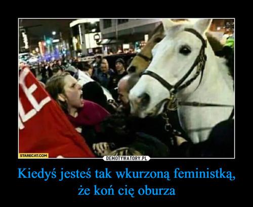 Kiedyś jesteś tak wkurzoną feministką, że koń cię oburza