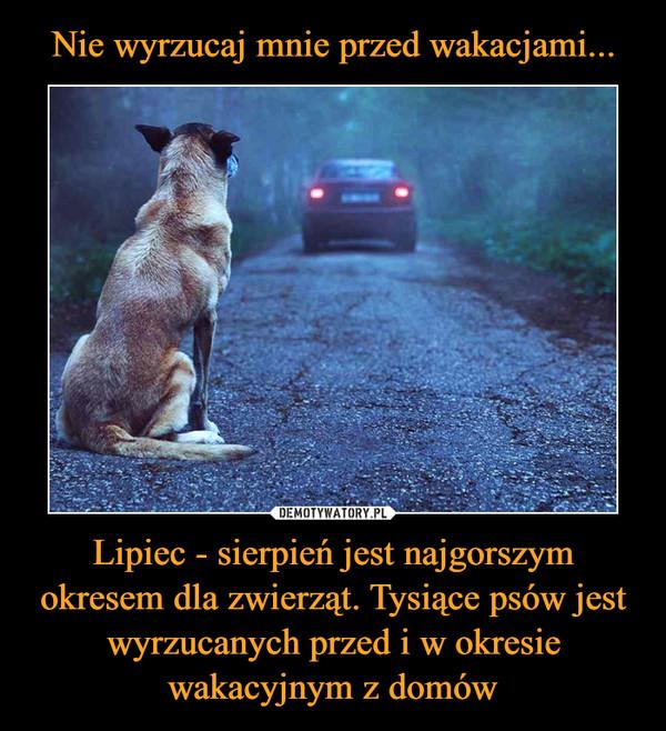 Lipiec - sierpień jest najgorszym okresem dla zwierząt. Tysiące psów jest wyrzucanych przed i w okresie wakacyjnym z domów –