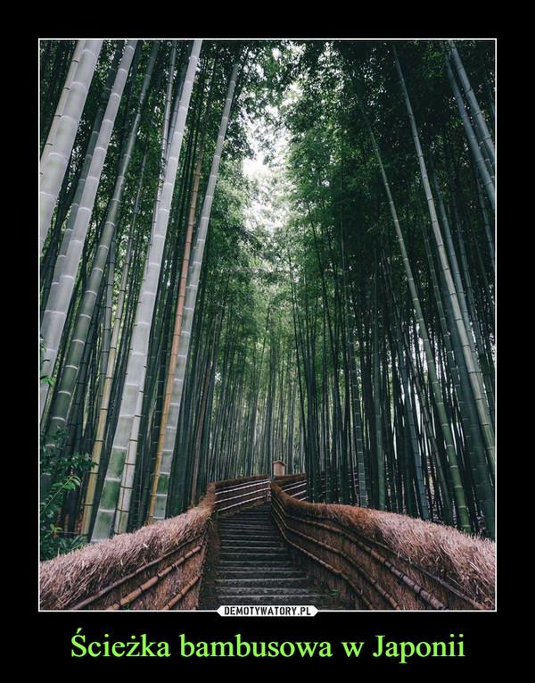 Ścieżka bambusowa w Japonii –