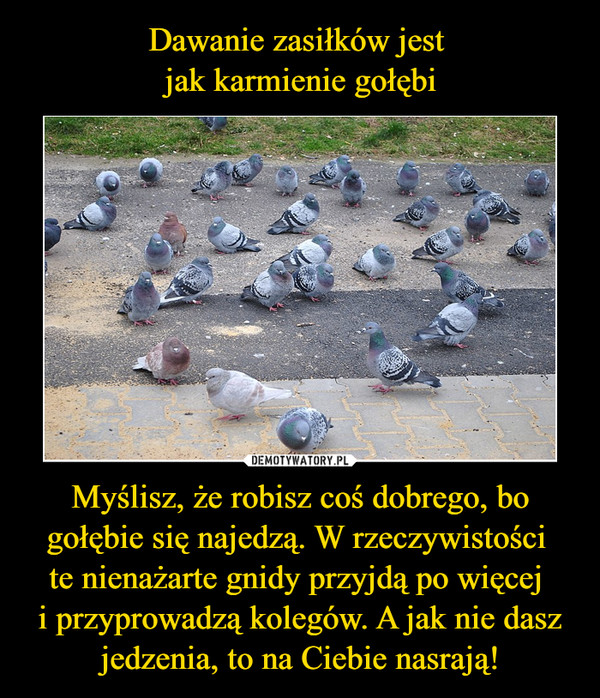 Myślisz, że robisz coś dobrego, bo gołębie się najedzą. W rzeczywistości te nienażarte gnidy przyjdą po więcej i przyprowadzą kolegów. A jak nie dasz jedzenia, to na Ciebie nasrają! –