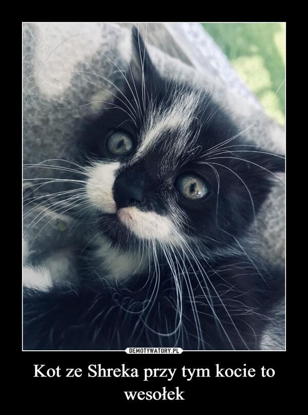 Kot ze Shreka przy tym kocie to wesołek –