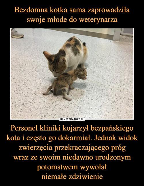 Bezdomna kotka sama zaprowadziła swoje młode do weterynarza Personel kliniki kojarzył bezpańskiego kota i często go dokarmiał. Jednak widok zwierzęcia przekraczającego próg wraz ze swoim niedawno urodzonym potomstwem wywołał niemałe zdziwienie